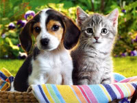 Puppies, Kittens, and Kids: Marketing to the Emotions